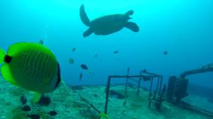 Turtle fish wreck dive